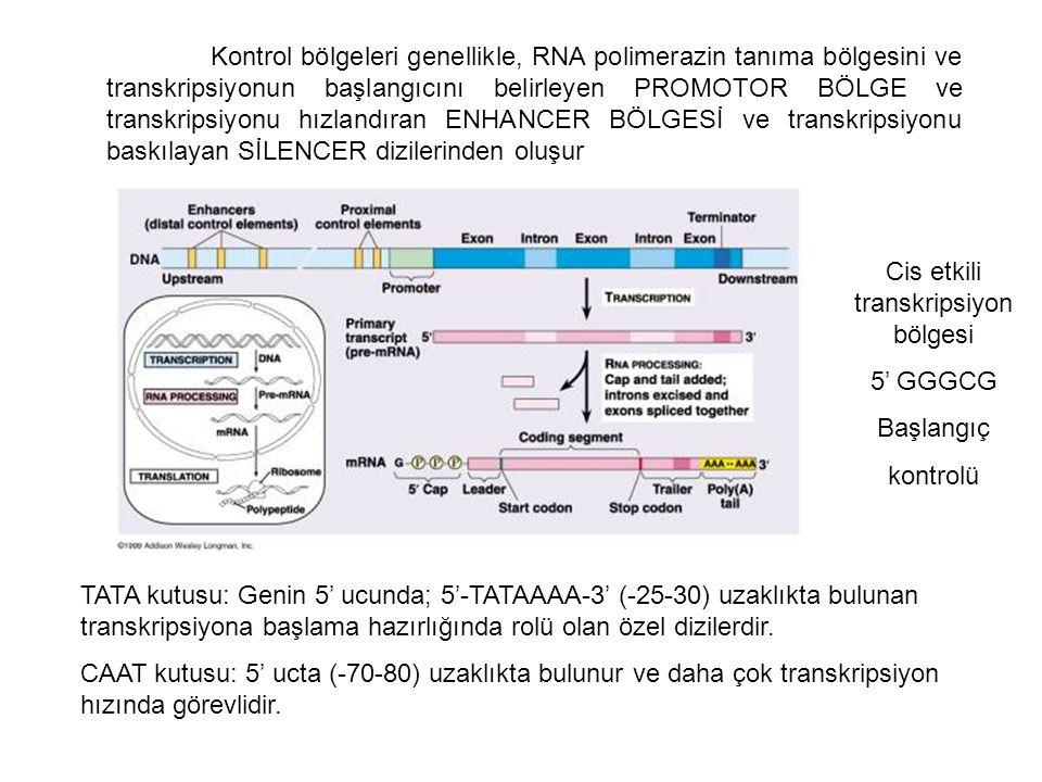 Kontrol bölgeleri genellikle, RNA polimerazin tanıma bölgesini ve transkripsiyonun başlangıcını belirleyen PROMOTOR BÖLGE ve transkripsiyonu hızlandır