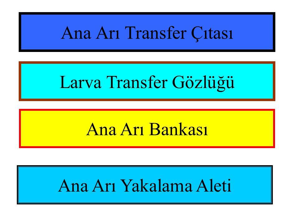 Ana Arı Transfer Çıtası Larva Transfer Gözlüğü Ana Arı Bankası Ana Arı Yakalama Aleti