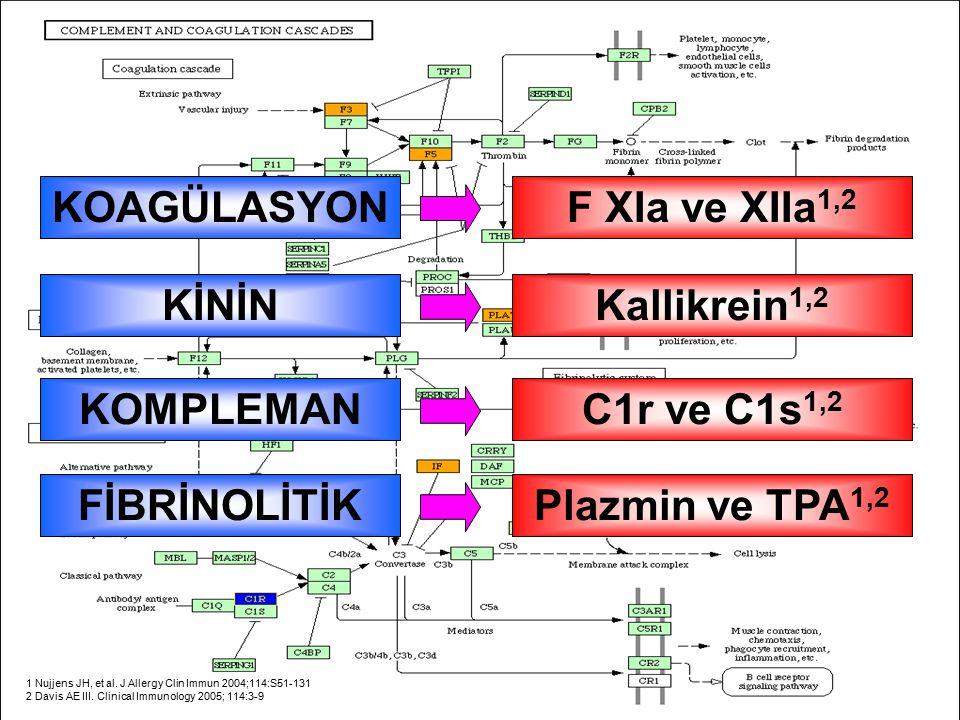 1 Nujjens JH, et al. J Allergy Clin Immun 2004;114:S51-131 2 Davis AE III. Clinical Immunology 2005; 114:3-9 F XIa ve XIIa 1,2 KOAGÜLASYONKallikrein 1