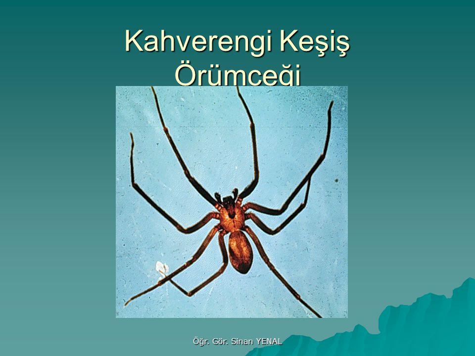 Öğr. Gör. Sinan YENAL Kahverengi Keşiş Örümceği