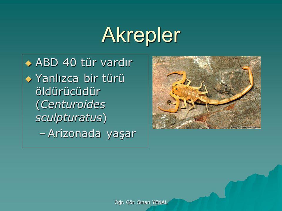 Akrepler  ABD 40 tür vardır  Yanlızca bir türü öldürücüdür (Centuroides sculpturatus) –Arizonada yaşar