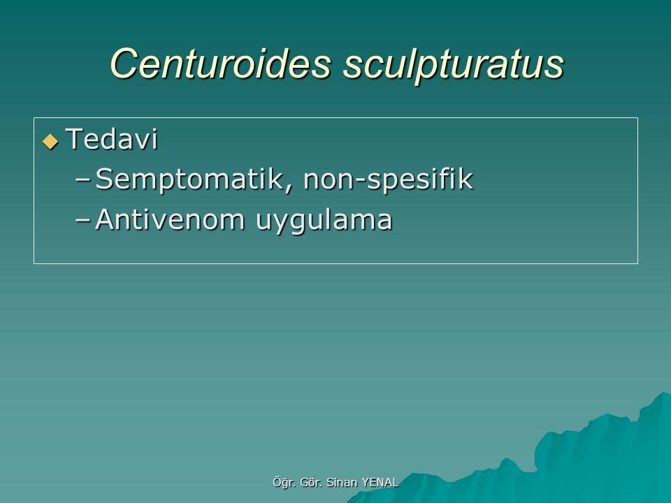 Öğr. Gör. Sinan YENAL Centuroides sculpturatus  Tedavi –Semptomatik, non-spesifik –Antivenom uygulama