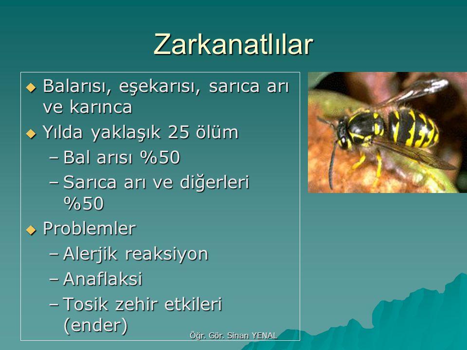 Öğr. Gör. Sinan YENAL Zarkanatlılar  Balarısı, eşekarısı, sarıca arı ve karınca  Yılda yaklaşık 25 ölüm –Bal arısı %50 –Sarıca arı ve diğerleri %50