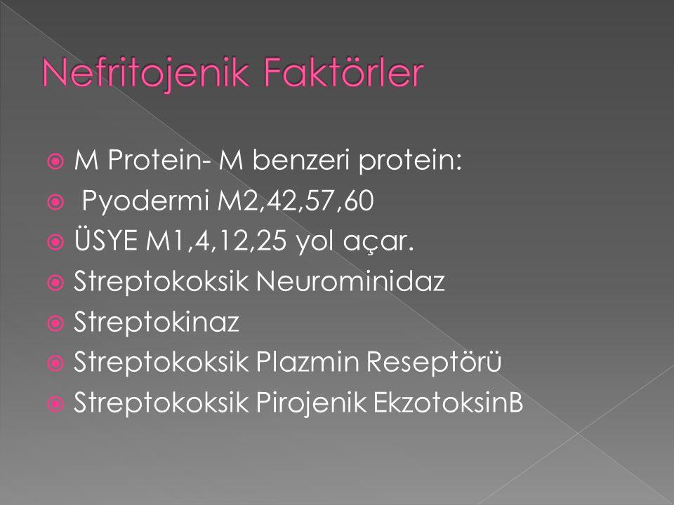  M Protein- M benzeri protein:  Pyodermi M2,42,57,60  ÜSYE M1,4,12,25 yol açar.  Streptokoksik Neurominidaz  Streptokinaz  Streptokoksik Plazmin