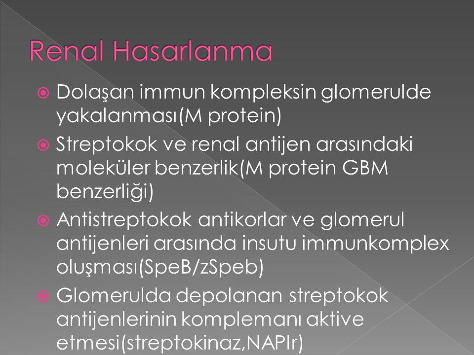  Dolaşan immun kompleksin glomerulde yakalanması(M protein)  Streptokok ve renal antijen arasındaki moleküler benzerlik(M protein GBM benzerliği) 