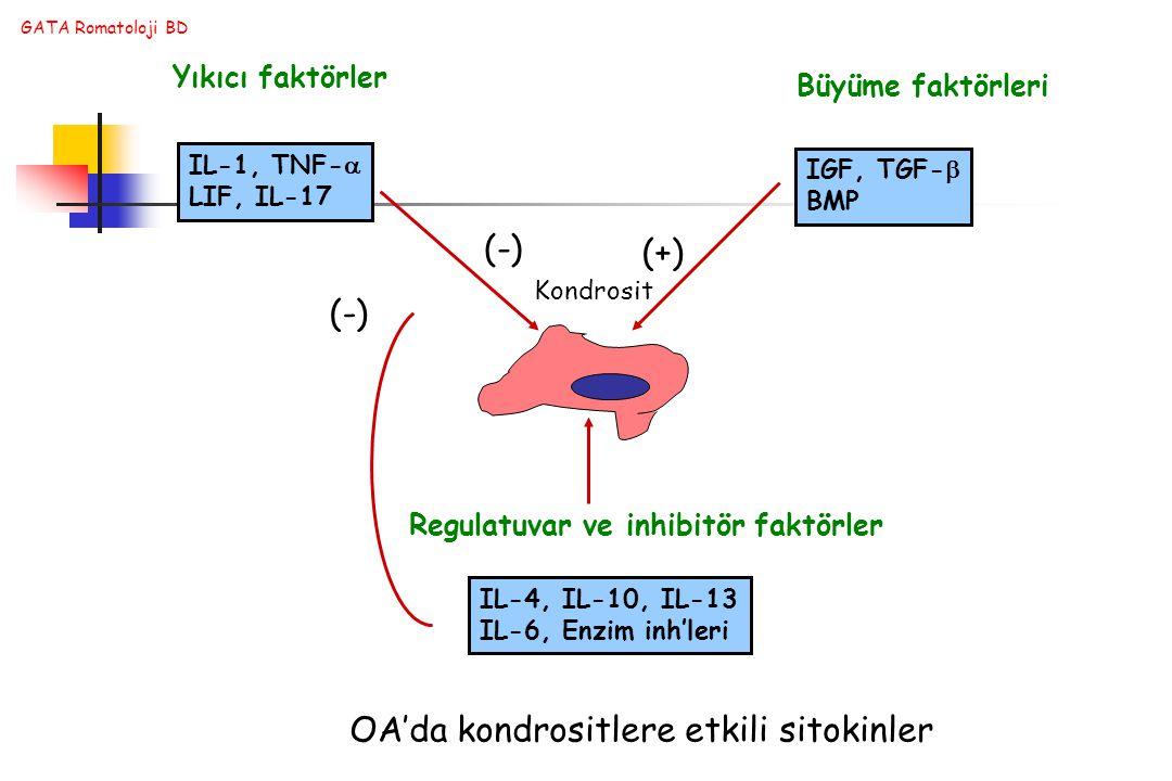 GATA Romatoloji BD Kondrosit IL-1, TNF-  LIF, IL-17 IGF, TGF-  BMP IL-4, IL-10, IL-13 IL-6, Enzim inh'leri Yıkıcı faktörler Büyüme faktörleri Regulatuvar ve inhibitör faktörler (-) (+) (-) OA'da kondrositlere etkili sitokinler