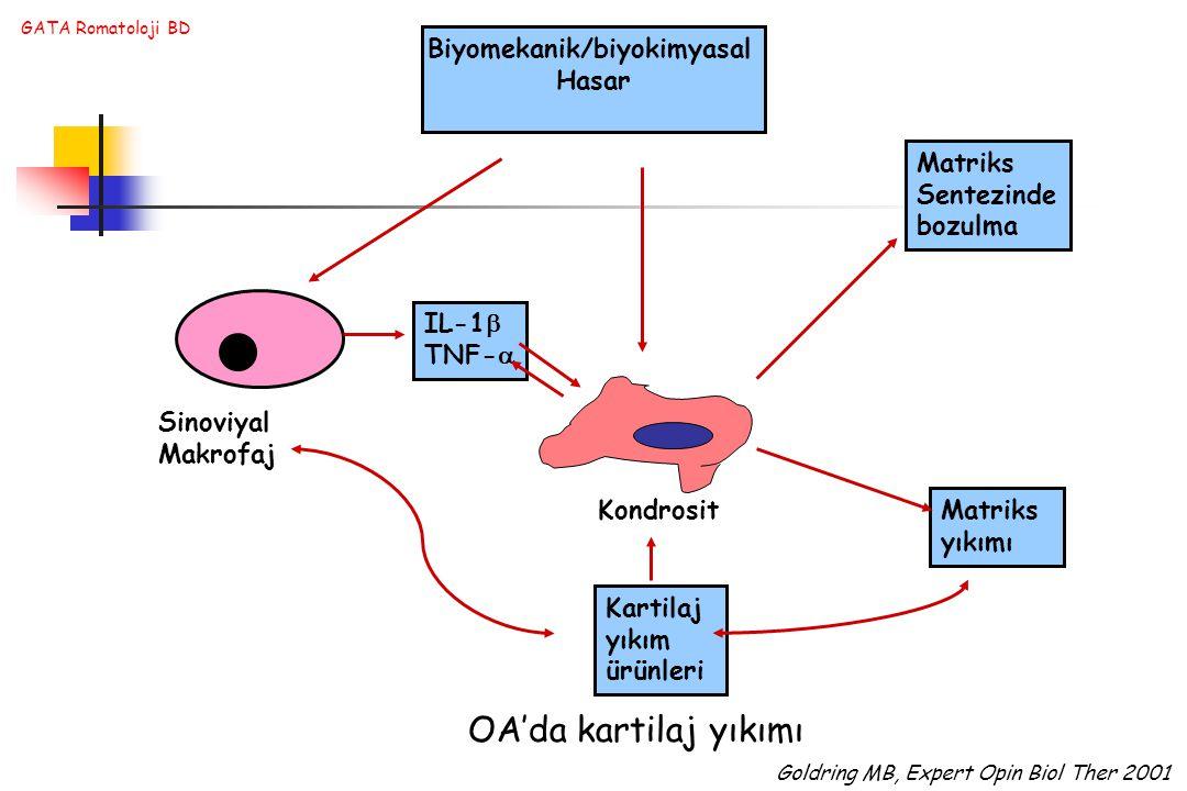 GATA Romatoloji BD Biyomekanik/biyokimyasal Hasar Sinoviyal Makrofaj Kondrosit Matriks Sentezinde bozulma Matriks yıkımı Kartilaj yıkım ürünleri IL-1  TNF-  OA'da kartilaj yıkımı Goldring MB, Expert Opin Biol Ther 2001