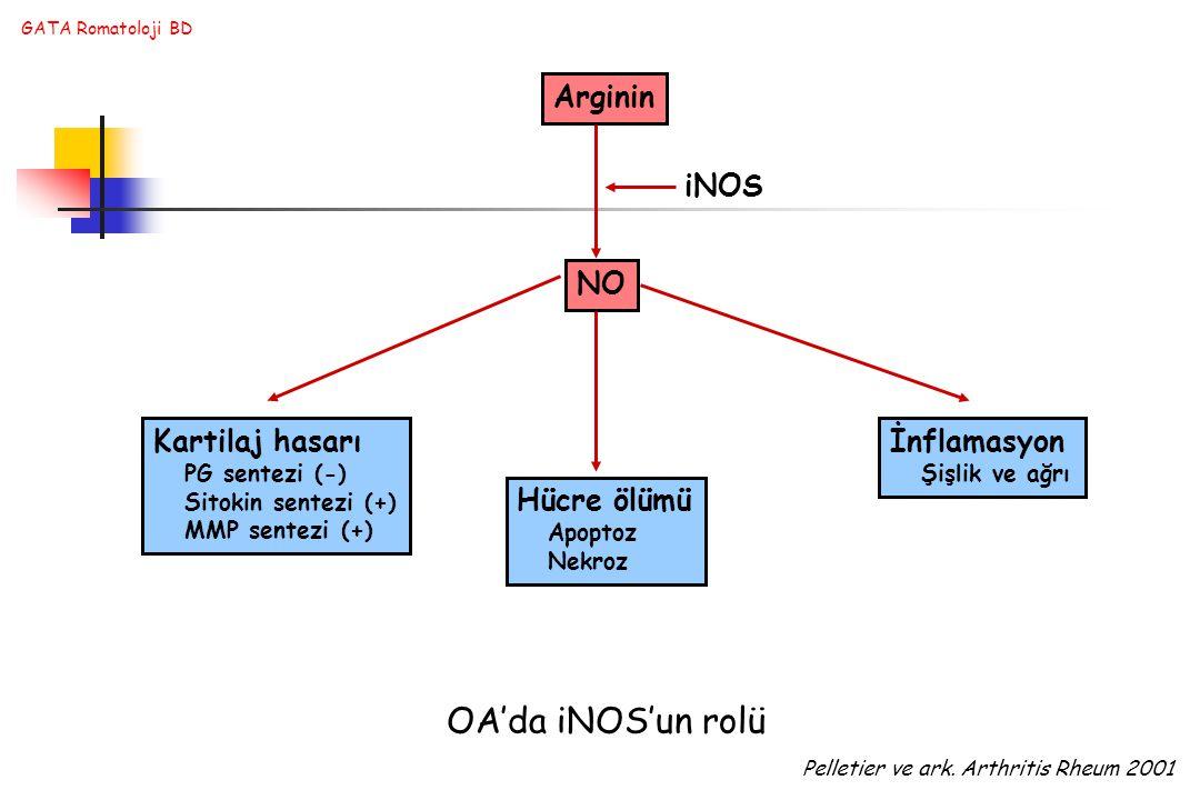 GATA Romatoloji BD Arginin NO Kartilaj hasarı PG sentezi (-) Sitokin sentezi (+) MMP sentezi (+) Hücre ölümü Apoptoz Nekroz İnflamasyon Şişlik ve ağrı iNOS OA'da iNOS'un rolü Pelletier ve ark.