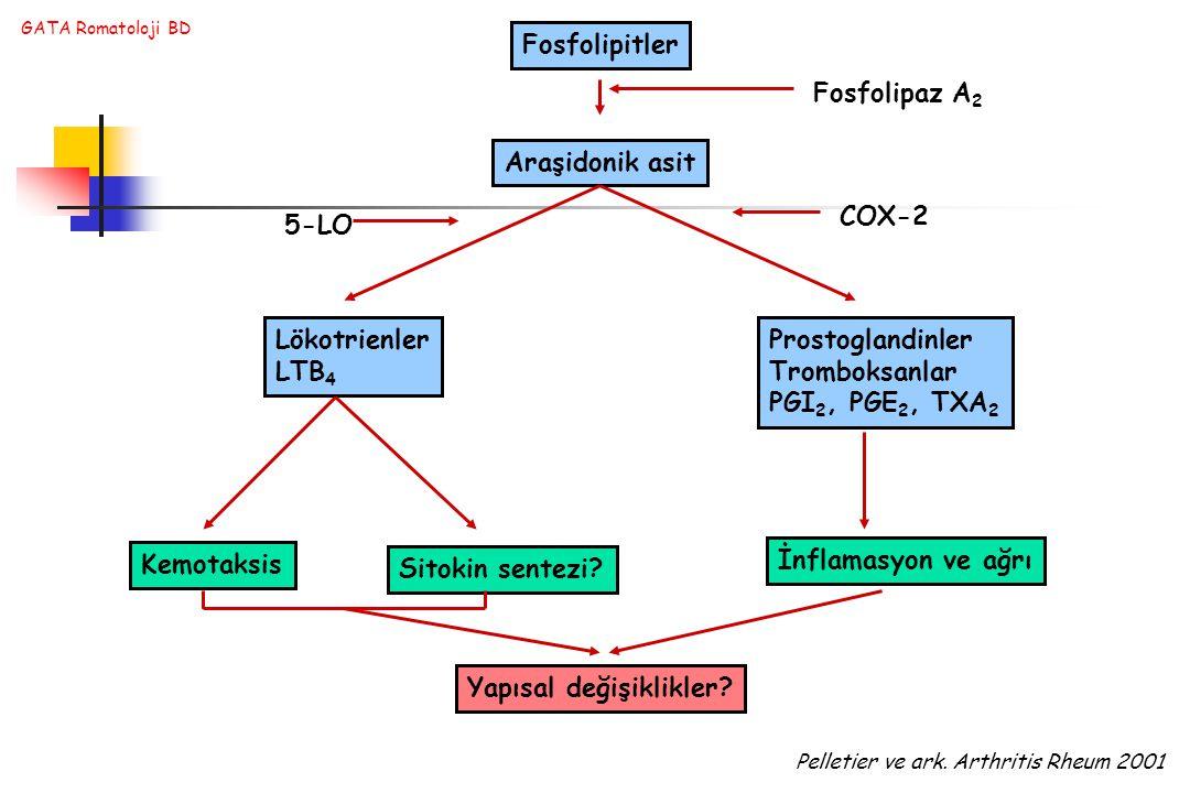 GATA Romatoloji BD Fosfolipitler Araşidonik asit 5-LO COX-2 Lökotrienler LTB 4 Prostoglandinler Tromboksanlar PGI 2, PGE 2, TXA 2 Kemotaksis Sitokin sentezi.