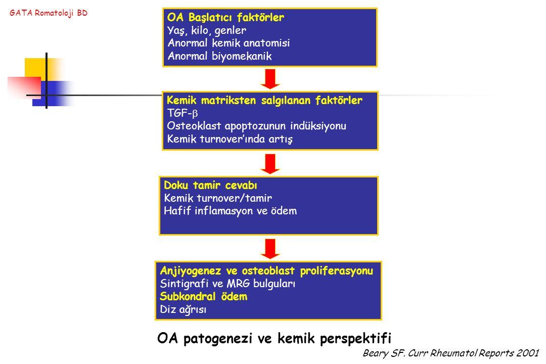 GATA Romatoloji BD OA Başlatıcı faktörler Yaş, kilo, genler Anormal kemik anatomisi Anormal biyomekanik Kemik matriksten salgılanan faktörler TGF-  Osteoklast apoptozunun indüksiyonu Kemik turnover'ında artış Doku tamir cevabı Kemik turnover/tamir Hafif inflamasyon ve ödem Anjiyogenez ve osteoblast proliferasyonu Sintigrafi ve MRG bulguları Subkondral ödem Diz ağrısı OA patogenezi ve kemik perspektifi Beary SF.