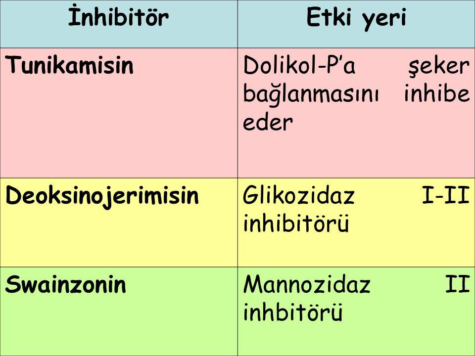 İnhibitörEtki yeri TunikamisinDolikol-P'a şeker bağlanmasını inhibe eder DeoksinojerimisinGlikozidaz I-II inhibitörü SwainzoninMannozidaz II inhbitörü
