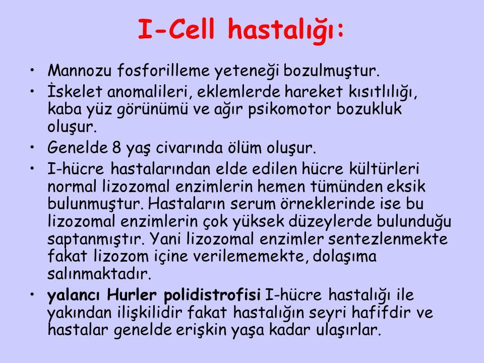 I-Cell hastalığı: Mannozu fosforilleme yeteneği bozulmuştur. İskelet anomalileri, eklemlerde hareket kısıtlılığı, kaba yüz görünümü ve ağır psikomotor