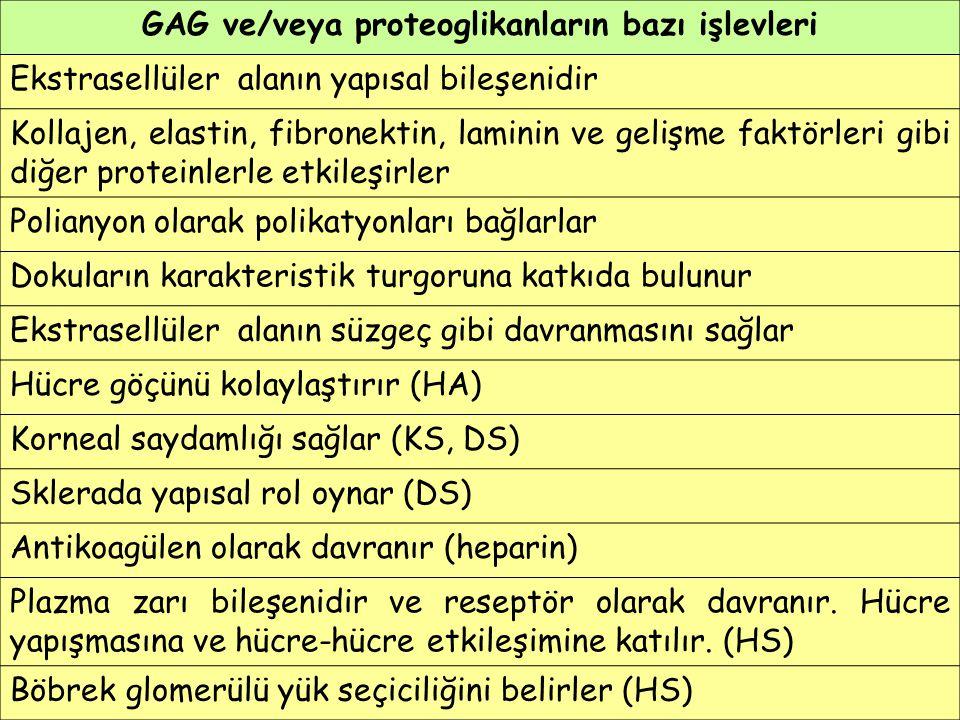 GAG ve/veya proteoglikanların bazı işlevleri Ekstrasellüler alanın yapısal bileşenidir Kollajen, elastin, fibronektin, laminin ve gelişme faktörleri g