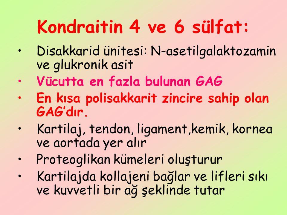 Kondraitin 4 ve 6 sülfat: Disakkarid ünitesi: N-asetilgalaktozamin ve glukronik asit Vücutta en fazla bulunan GAG En kısa polisakkarit zincire sahip o