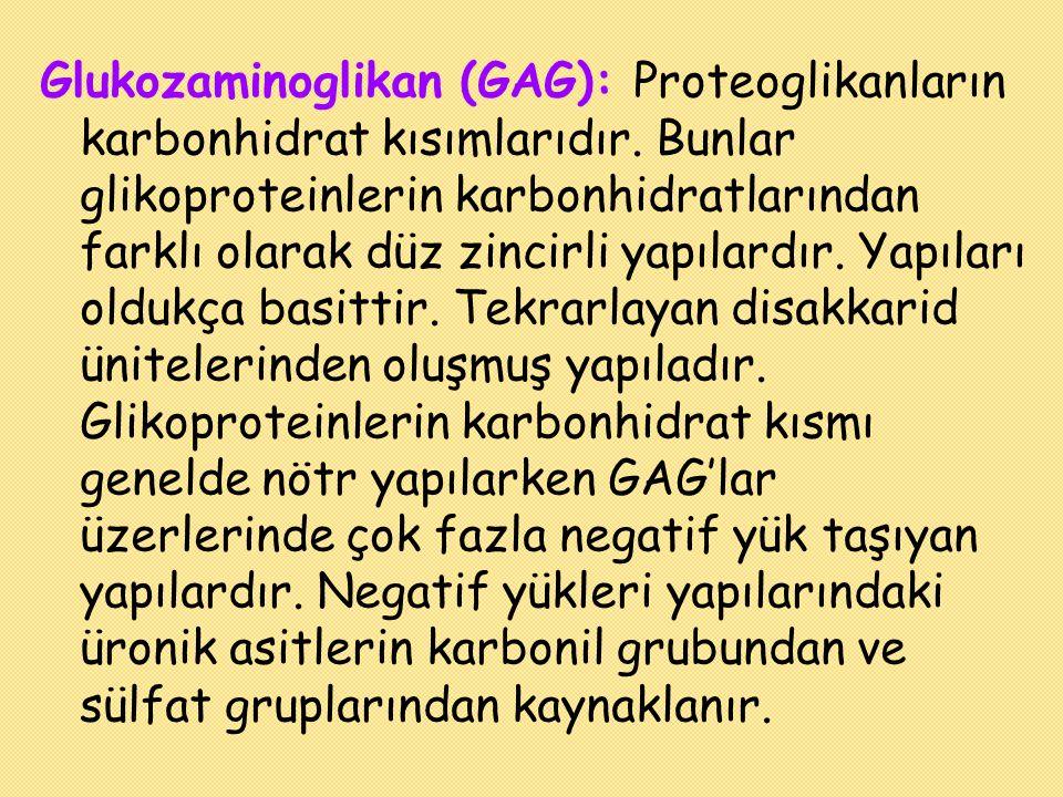Glukozaminoglikan (GAG): Proteoglikanların karbonhidrat kısımlarıdır. Bunlar glikoproteinlerin karbonhidratlarından farklı olarak düz zincirli yapılar