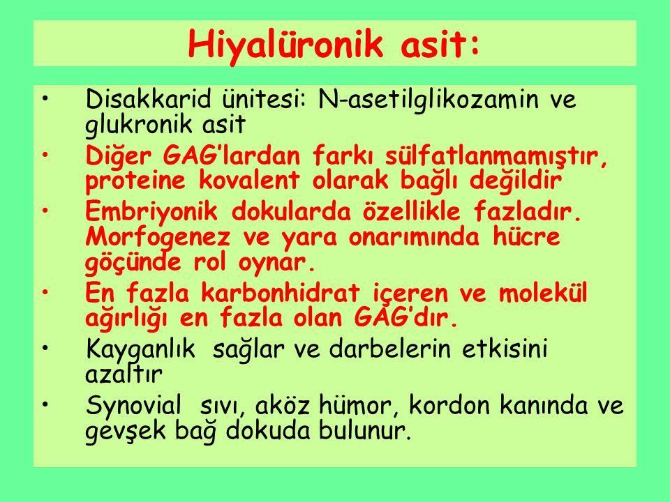 Hiyalüronik asit: Disakkarid ünitesi: N-asetilglikozamin ve glukronik asit Diğer GAG'lardan farkı sülfatlanmamıştır, proteine kovalent olarak bağlı de