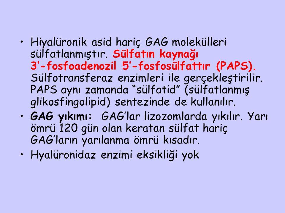 Hiyalüronik asid hariç GAG molekülleri sülfatlanmıştır. Sülfatın kaynağı 3'-fosfoadenozil 5'-fosfosülfattır (PAPS). Sülfotransferaz enzimleri ile gerç