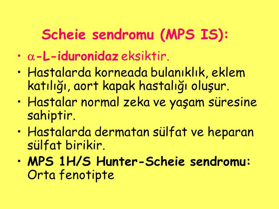 Scheie sendromu (MPS IS):  -L-iduronidaz eksiktir. Hastalarda korneada bulanıklık, eklem katılığı, aort kapak hastalığı oluşur. Hastalar normal zeka