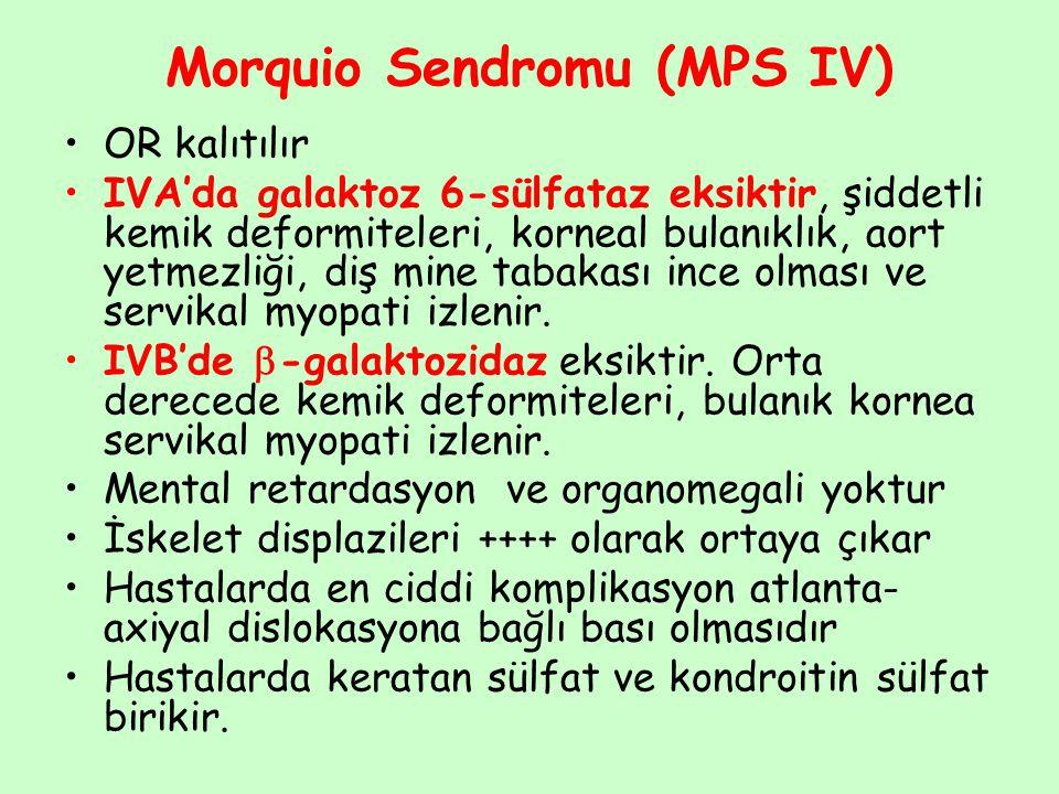 Morquio Sendromu (MPS IV) OR kalıtılır IVA'da galaktoz 6-sülfataz eksiktir, şiddetli kemik deformiteleri, korneal bulanıklık, aort yetmezliği, diş min