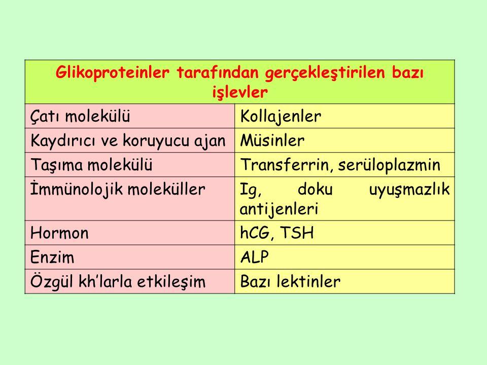 Scheie sendromu (MPS IS):  -L-iduronidaz eksiktir.