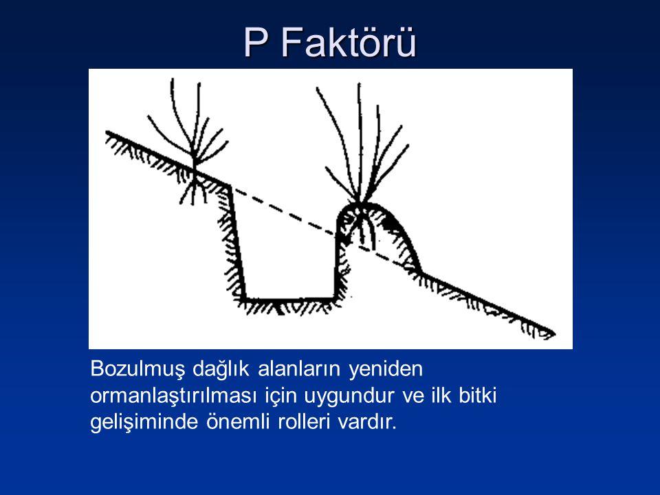 P Faktörü Bozulmuş dağlık alanların yeniden ormanlaştırılması için uygundur ve ilk bitki gelişiminde önemli rolleri vardır.