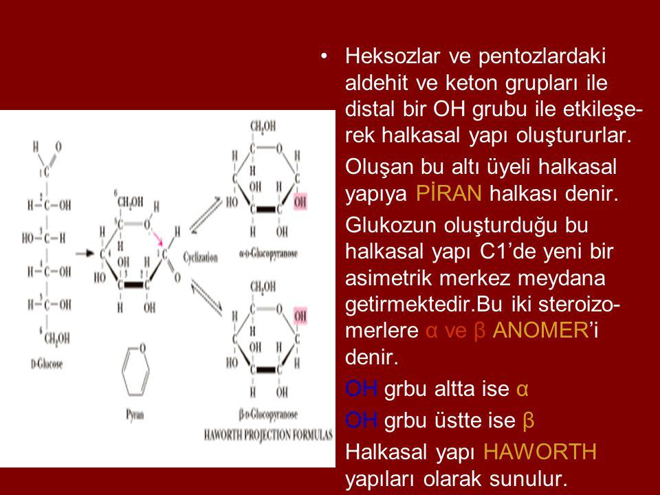 Heksozlar ve pentozlardaki aldehit ve keton grupları ile distal bir OH grubu ile etkileşe- rek halkasal yapı oluştururlar. Oluşan bu altı üyeli halkas