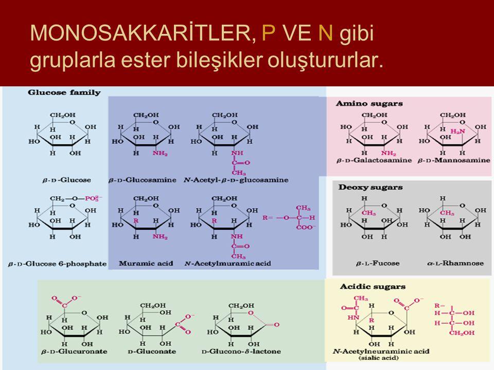 MONOSAKKARİTLER, P VE N gibi gruplarla ester bileşikler oluştururlar.
