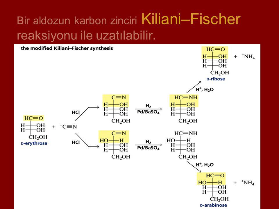 Bir aldozun karbon zinciri Kiliani–Fischer reaksiyonu ile uzatılabilir.