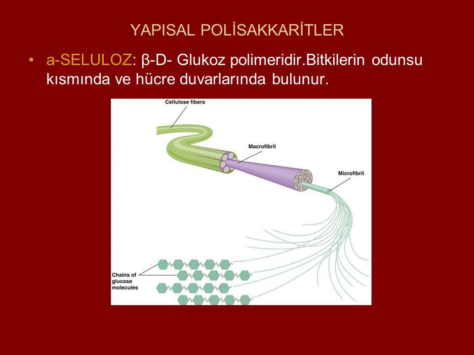 YAPISAL POLİSAKKARİTLER a-SELULOZ: β-D- Glukoz polimeridir.Bitkilerin odunsu kısmında ve hücre duvarlarında bulunur.