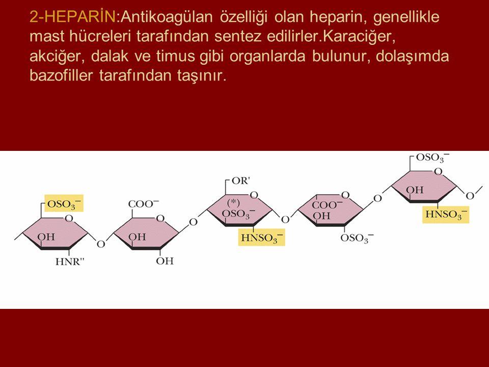 2-HEPARİN:Antikoagülan özelliği olan heparin, genellikle mast hücreleri tarafından sentez edilirler.Karaciğer, akciğer, dalak ve timus gibi organlarda