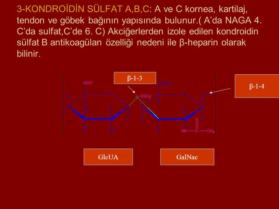 3-KONDROİDİN SÜLFAT A,B,C: A ve C kornea, kartilaj, tendon ve göbek bağının yapısında bulunur.( A'da NAGA 4. C'da sulfat,C'de 6. C) Akciğerlerden izol