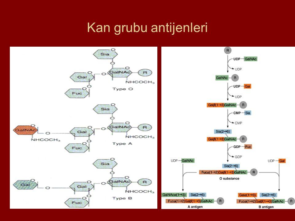 Kan grubu antijenleri
