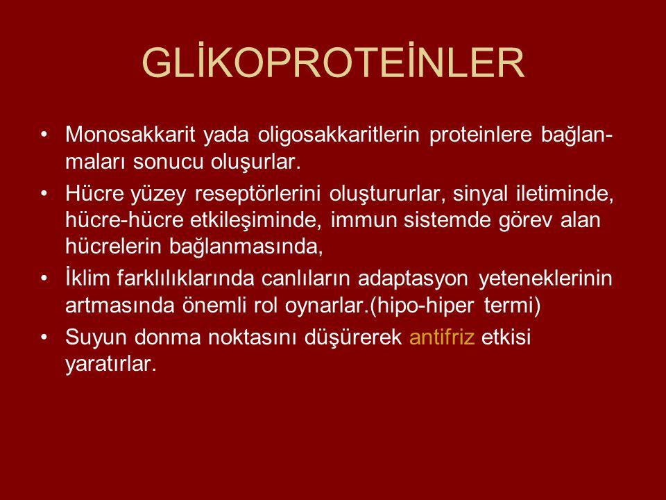 GLİKOPROTEİNLER Monosakkarit yada oligosakkaritlerin proteinlere bağlan- maları sonucu oluşurlar. Hücre yüzey reseptörlerini oluştururlar, sinyal ilet