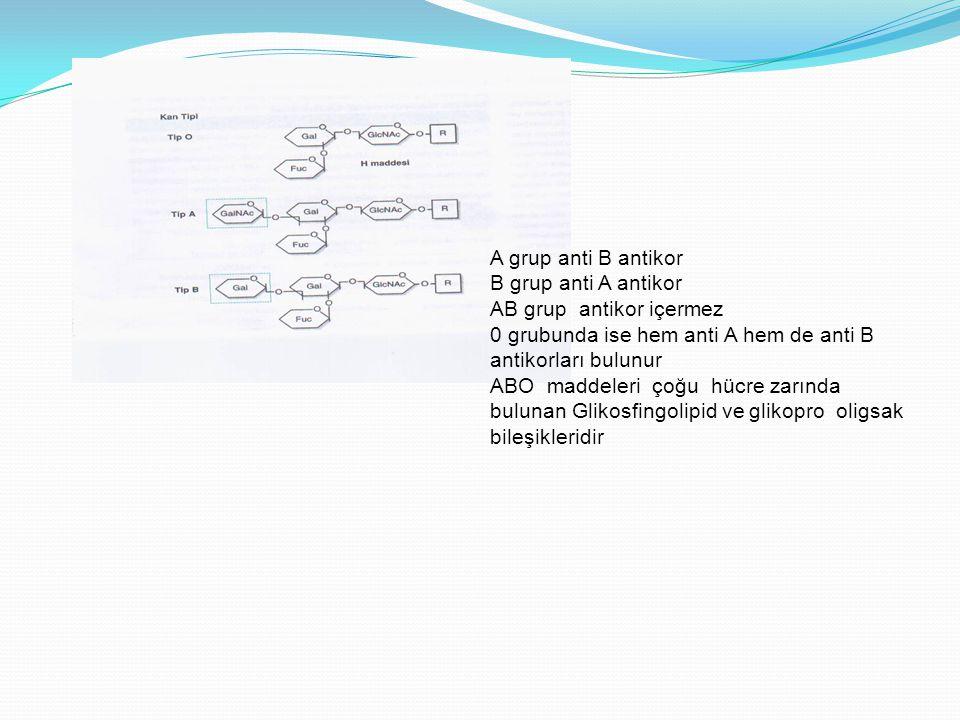 A grup anti B antikor B grup anti A antikor AB grup antikor içermez 0 grubunda ise hem anti A hem de anti B antikorları bulunur ABO maddeleri çoğu hüc