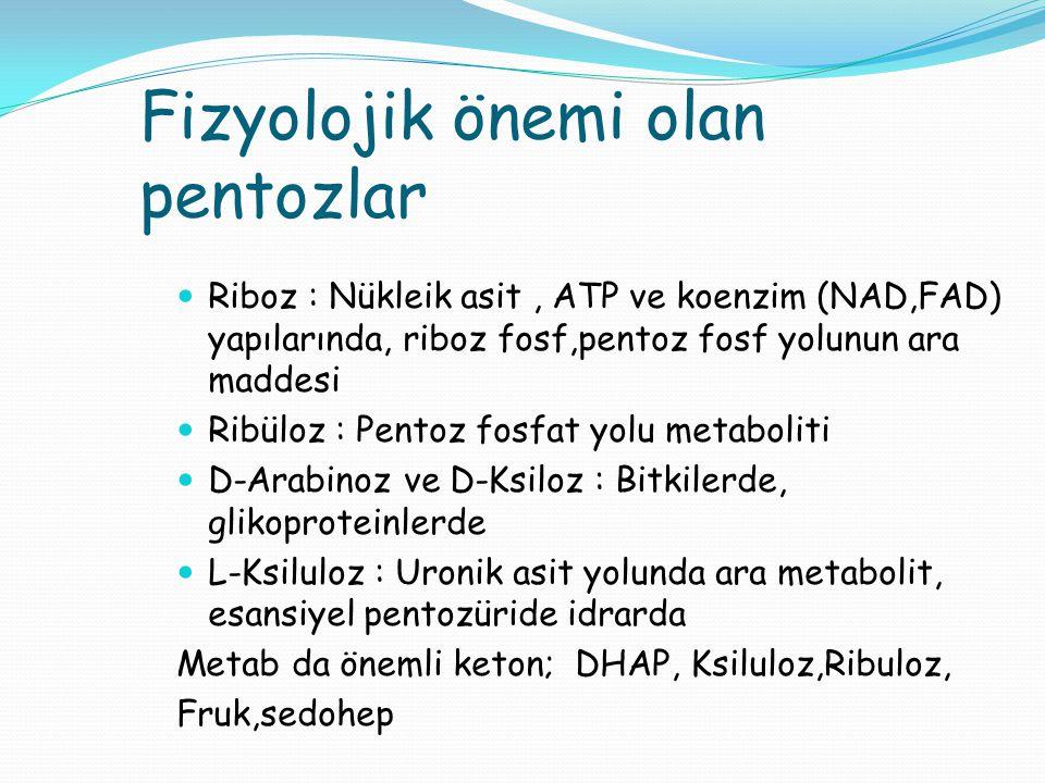 Fizyolojik önemi olan pentozlar Riboz : Nükleik asit, ATP ve koenzim (NAD,FAD) yapılarında, riboz fosf,pentoz fosf yolunun ara maddesi Ribüloz : Pento