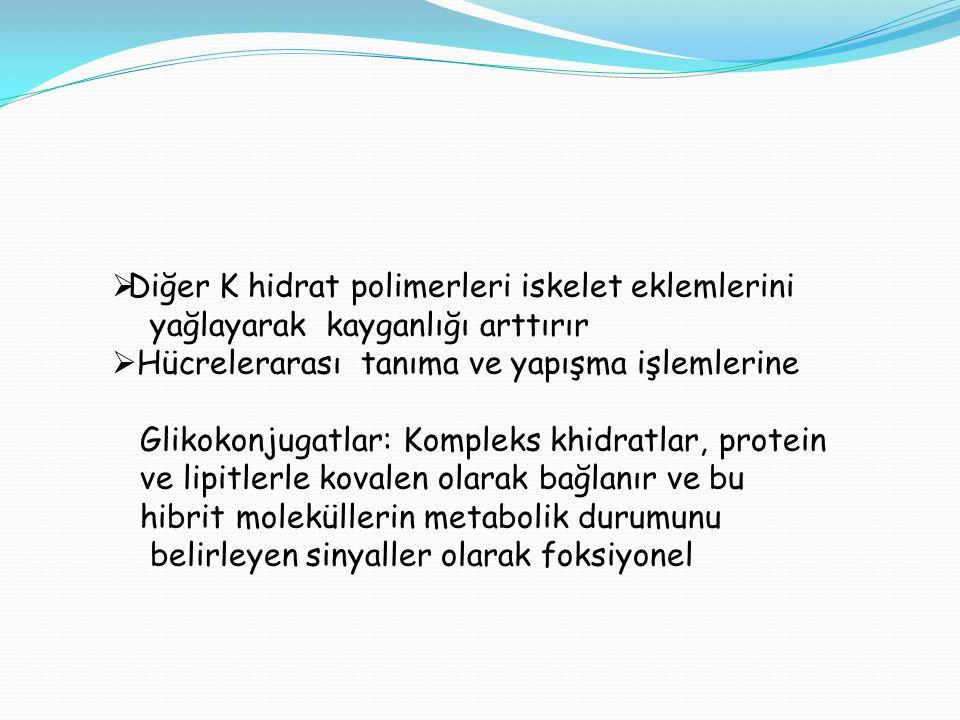  Diğer K hidrat polimerleri iskelet eklemlerini yağlayarak kayganlığı arttırır  Hücrelerarası tanıma ve yapışma işlemlerine Glikokonjugatlar: Komple