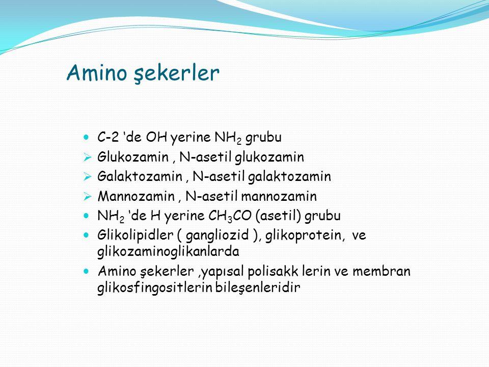 Amino şekerler C-2 'de OH yerine NH 2 grubu  Glukozamin, N-asetil glukozamin  Galaktozamin, N-asetil galaktozamin  Mannozamin, N-asetil mannozamin