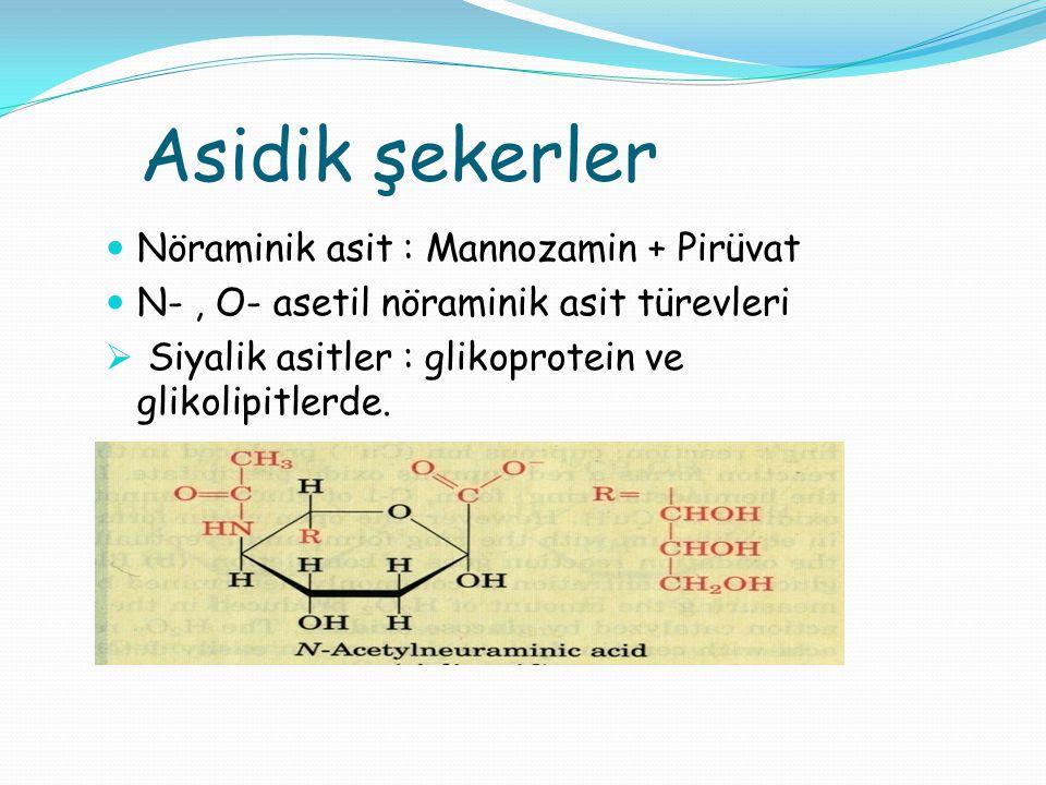 Asidik şekerler Nöraminik asit : Mannozamin + Pirüvat N-, O- asetil nöraminik asit türevleri  Siyalik asitler : glikoprotein ve glikolipitlerde.