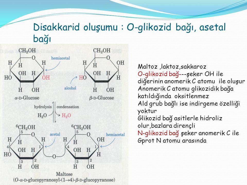 Disakkarid oluşumu : O-glikozid bağı, asetal bağı Maltoz,laktoz,sakkaroz O-glikozid bağ---şeker OH ile diğerinin anomerik C atomu ile oluşur Anomerik