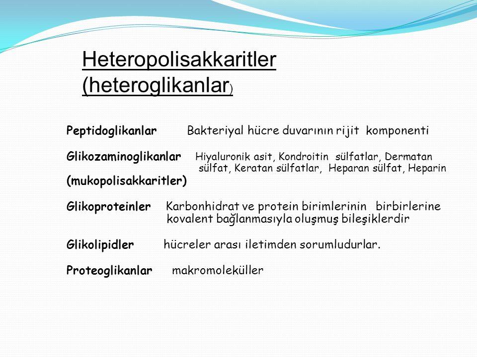Heteropolisakkaritler (heteroglikanlar ) Peptidoglikanlar Bakteriyal hücre duvarının rijit komponenti Glikozaminoglikanlar Hiyaluronik asit, Kondroiti