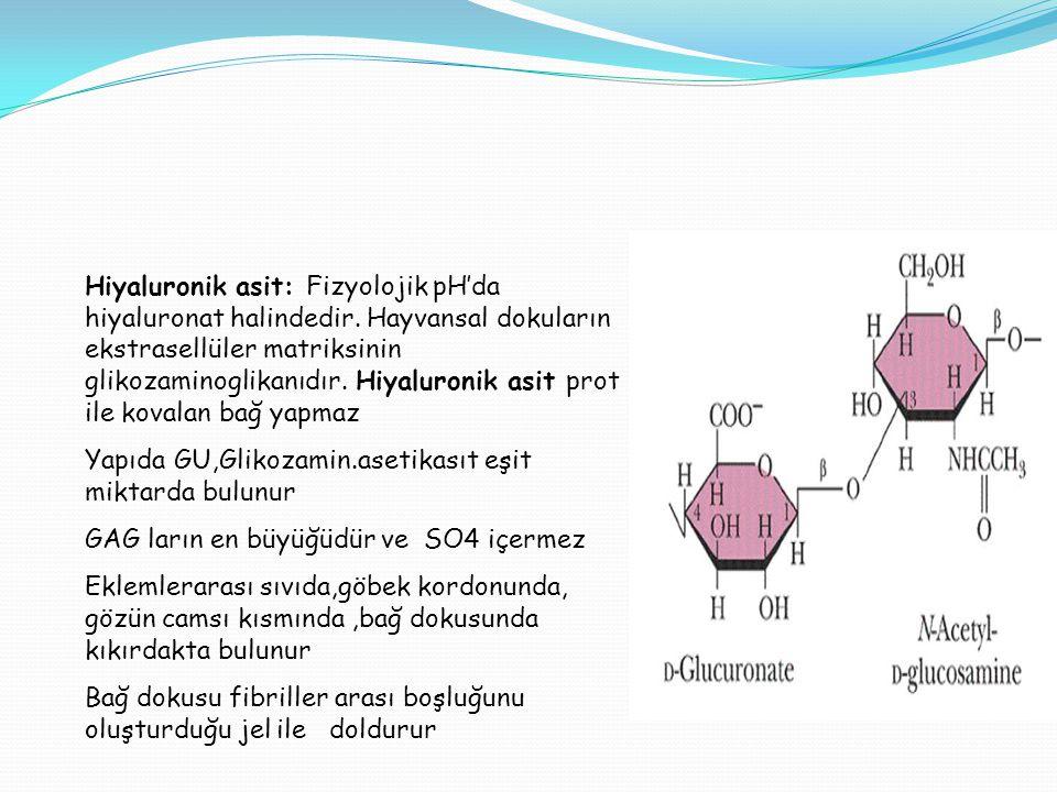 Hiyaluronik asit: Fizyolojik pH'da hiyaluronat halindedir. Hayvansal dokuların ekstrasellüler matriksinin glikozaminoglikanıdır. Hiyaluronik asit prot
