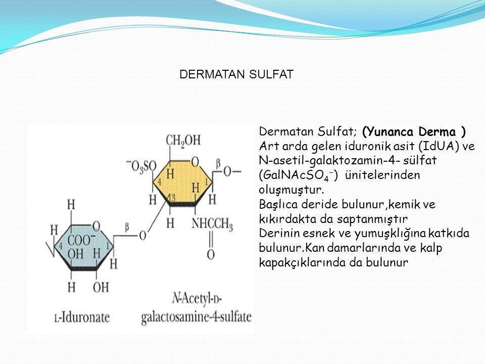 DERMATAN SULFAT Dermatan Sulfat; (Yunanca Derma ) Art arda gelen iduronik asit (IdUA) ve N-asetil-galaktozamin-4- sülfat (GalNAcSO 4  ) ünitelerinden