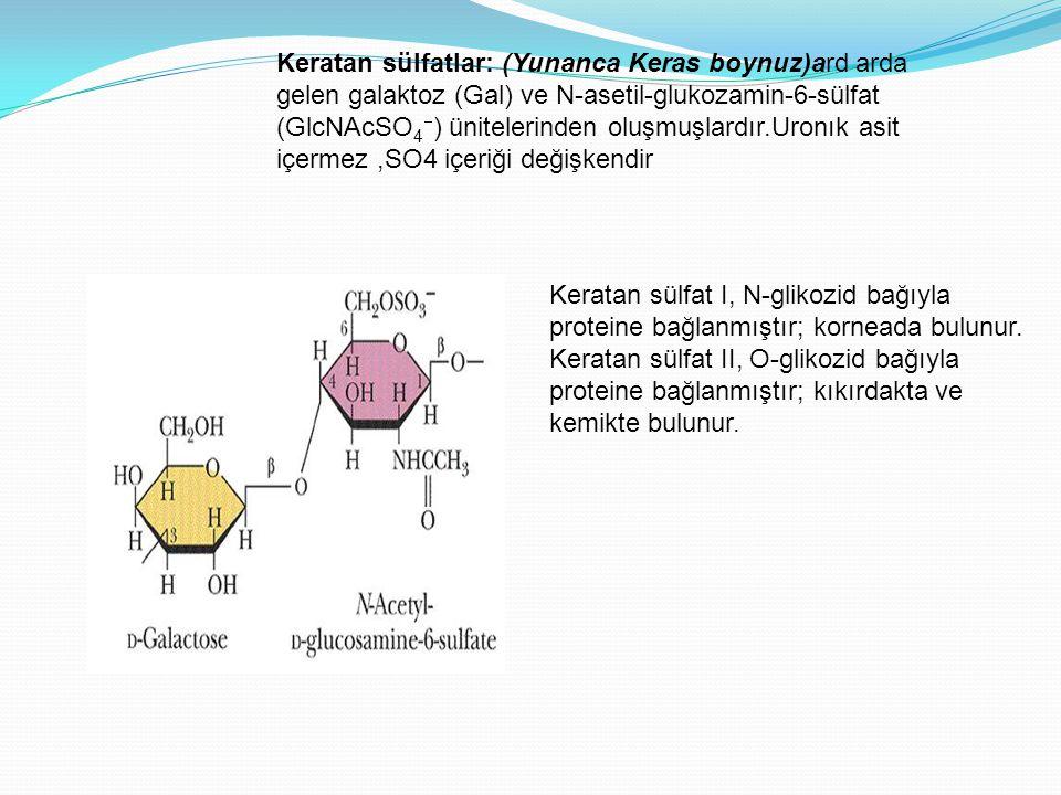 Keratan sülfatlar: (Yunanca Keras boynuz)ard arda gelen galaktoz (Gal) ve N-asetil-glukozamin-6-sülfat (GlcNAcSO 4  ) ünitelerinden oluşmuşlardır.Uro