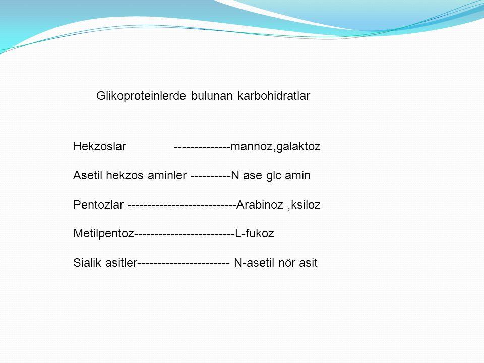 Glikoproteinlerde bulunan karbohidratlar Hekzoslar --------------mannoz,galaktoz Asetil hekzos aminler ----------N ase glc amin Pentozlar ------------