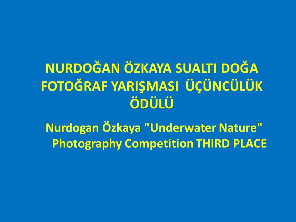 NURDOĞAN ÖZKAYA SUALTI DOĞA FOTOĞRAF YARIŞMASI – USTALAR KATEGORISI BİRİNCİLİK ÖDÜLÜ Nurdogan Özkaya Underwater Nature Photography Competition MASTERS SECTION WINNER/PLACE