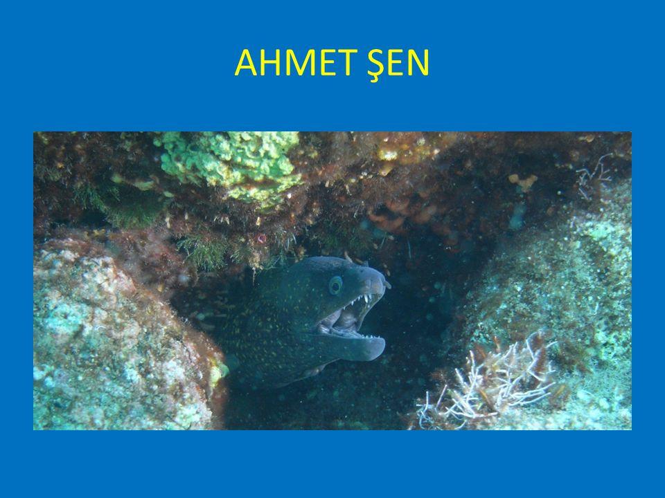 NURDOĞAN ÖZKAYA SUALTI DOĞA FOTOĞRAF YARIŞMASI BİRİNCİLİK ÖDÜLÜ Nurdogan Özkaya Underwater Nature Photography Competition WINNER