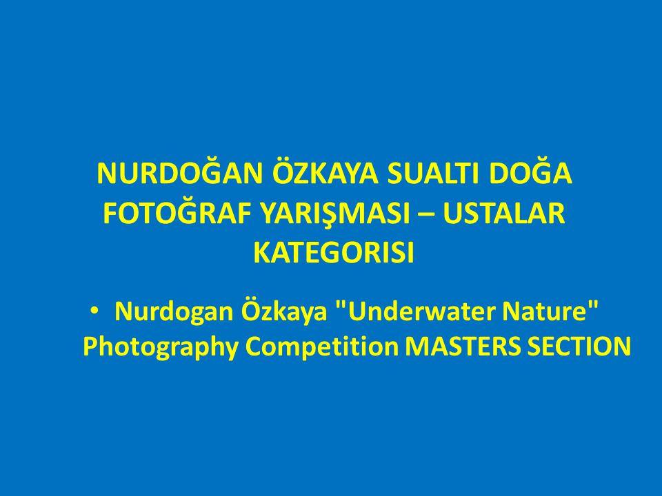 NURDOĞAN ÖZKAYA SUALTI DOĞA FOTOĞRAF YARIŞMASI – USTALAR KATEGORISI ÜÇÜNCÜLÜK ÖDÜLÜ Nurdogan Özkaya Underwater Nature Photography Competition MASTERS SECTION THIRD PLACE