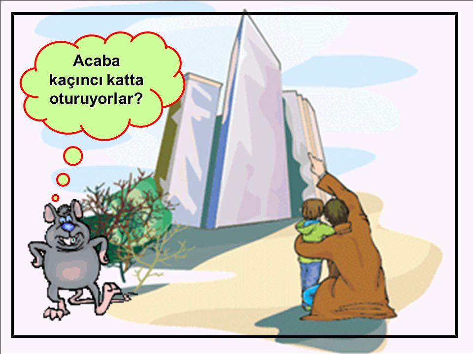 Hey çocuklar,avcıdan kaçan tavşanların birincisi hangisi? tavşanların birincisi hangisi? 1.2.3.