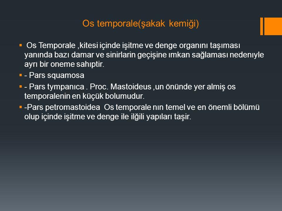Os temporale(şakak kemiği)  Os Temporale,kitesi içinde işitme ve denge organını taşıması yanında bazı damar ve sinirlarin geçişine ımkan sağlaması ne