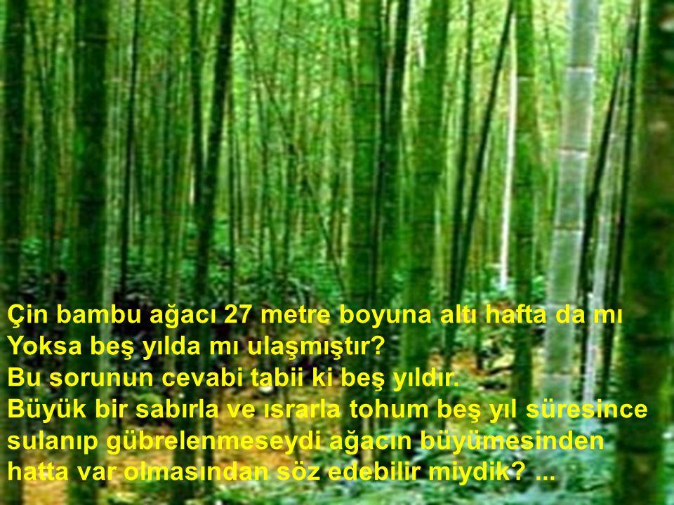 Çin bambu ağacı 27 metre boyuna altı hafta da mı Yoksa beş yılda mı ulaşmıştır? Bu sorunun cevabi tabii ki beş yıldır. Büyük bir sabırla ve ısrarla to